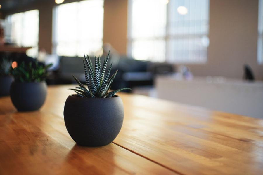 Comment végétaliser ses espaces professionnels ?